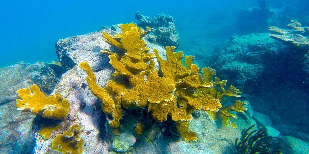 Snorkeling aux Îles Vierges américaines